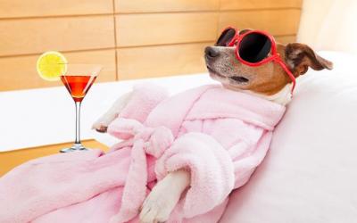 No es un simple baño, es un regreso a la vida para tu perrito
