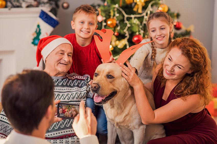 5 consejos para que tu perrito consentido disfrute estas fiestas decembrinas