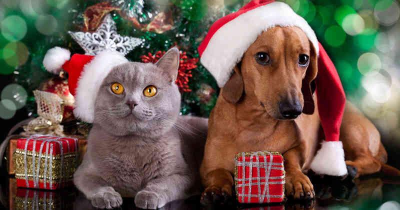 Los mejores regalitos para tu consentido de 4 patas los tenemos en Llao's Pet