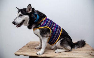 Accesorios y productos mexicanos para tus peludines en Llao´s Pet