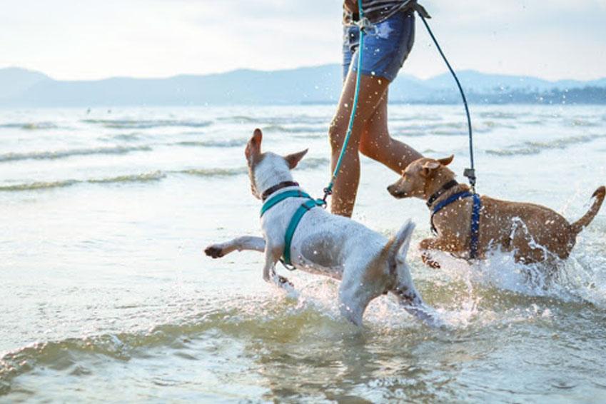 Tips y consejos para disfrutar tus próximas vacaciones junto con tu peque